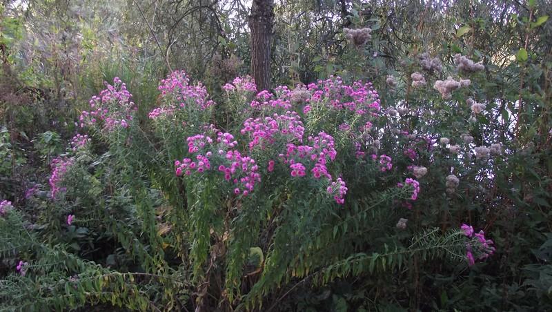 Jardin de l'Aubépré dans Balades bucoliques gelaucourt1